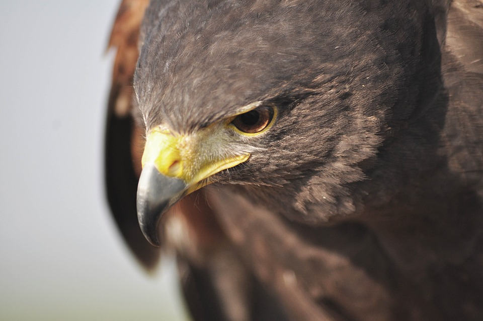 Best Binoculars for Birding 2017 – The Ultimate Guide