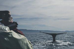 Best Binoculars for Whale Watching